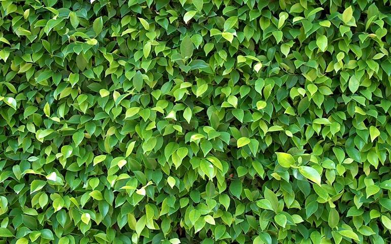 photosmart_featured image-770×481
